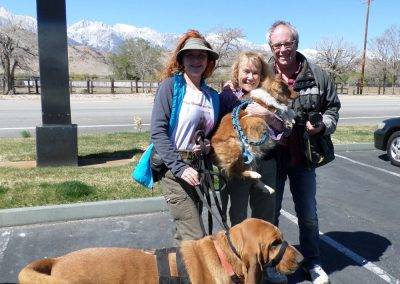Found alive the day of the search, this dog was missing in Central California. Bloodhound poses with the happy owners to have their lost dog back home safe.