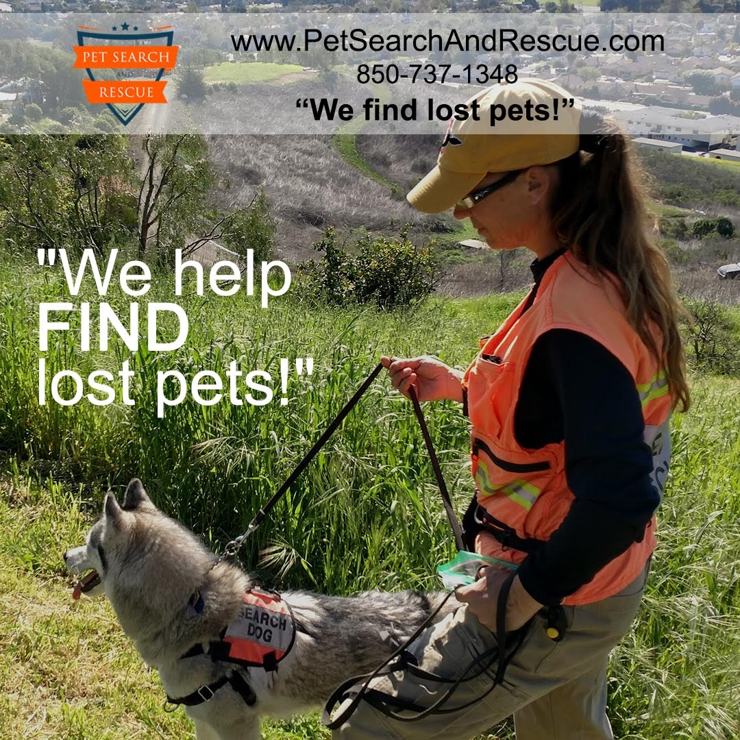 Texas Lost Pet Help with Search Dogs from Pet Search and Rescue